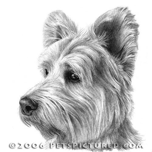 11-West-Highland-White-Terrier-Westie-Susan-Donley-Cats-and-Dogs-Featured-in-Pencil-Portraits-www-designstack-co