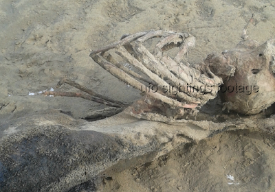 The remains of a Mermaid washes up on a UK beach.
