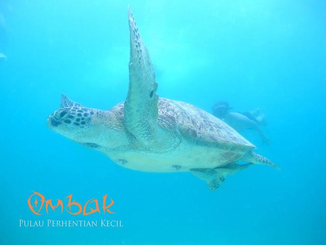 Pakej Pulau Perhentian Kecil 2018 , Pakej Perhentian Murah 2018 , Pakej Pulau Perhentian 2018