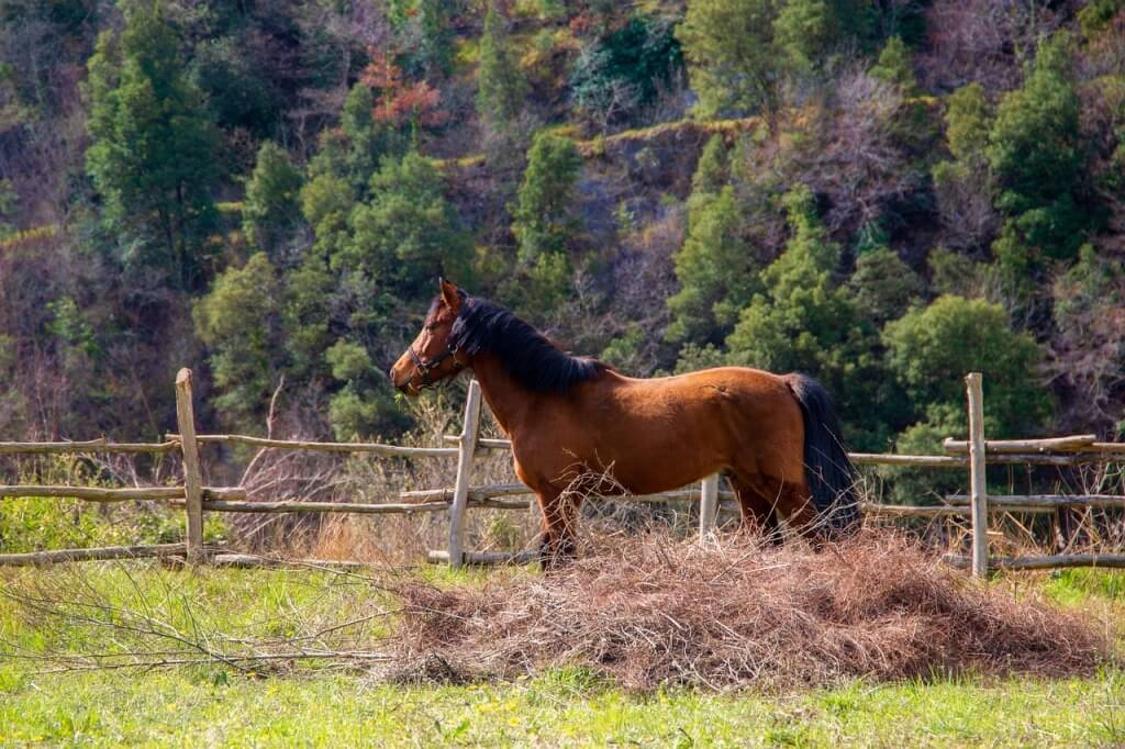 An excerpt from Horse Country - A World of Horses by Christine Meunier