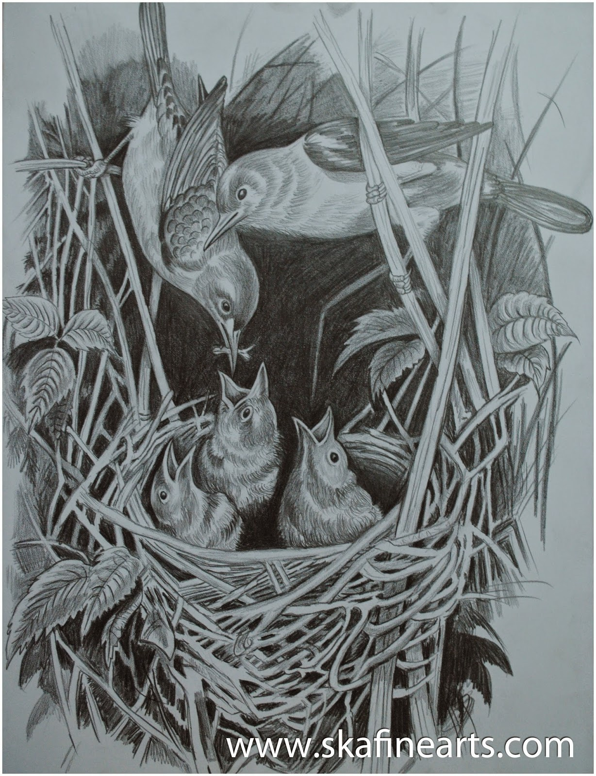 Realistic pencil drawing birds in nest