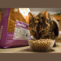 Petcurean Now Fresh Senior Weight Management Cat Food Review