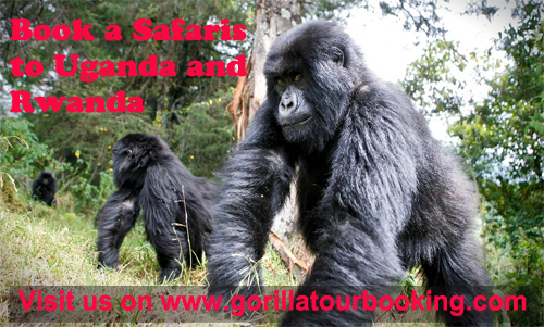 Gorilla Trekking Holiday Bwindi Impenetrable Park Uganda  5 Days and 4 Nights