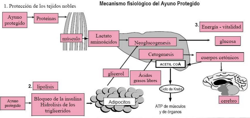 Cómo Metabolismo en tres sencillos pasos