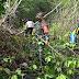 Antisipasi Banjir Melanda Beberapa Desa, Tiga Pilar Desa Mojomulyo dan BKSDA Jember, Rapikan Pohon Mangrove Yang Menutup 1300 meter Aliran Sungai