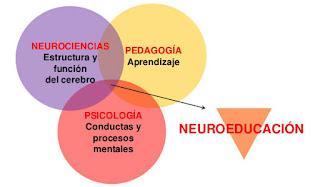 Neuroeducación y aprendizaje