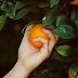 O doce fruto do Espírito