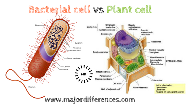 Difference between Bacterial Cell and Plant cell (Bacterial cell vs Plant cell)