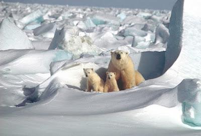 Warum haben Eisbären schwarze Haut? Eine Projektwoche zum Thema Bionik Tag 1/5