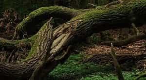 Pengenalan bagian-bagian kayu merupakan dasar kegiatan yang dilakukan untuk melakukan identifikasi terhadap kayu. Identifikasi kayu tersebut bertujuan untuk mengetahui klasifikasi kayu serta manfaat kayu selanjutnya apabila digunakan sebagai bahan dasar pembuatan barang tertentu seperti perabotan, bahan dasar konstruksi bangunan, dan lain-lain. Menurut Dumanauw (1990), bagian-bagian kayu terdiri dari kulit kayu, kambium, kayu gubal, kayu teras, hati kayu, lingkaran tahun, dan jari-jari kayu.