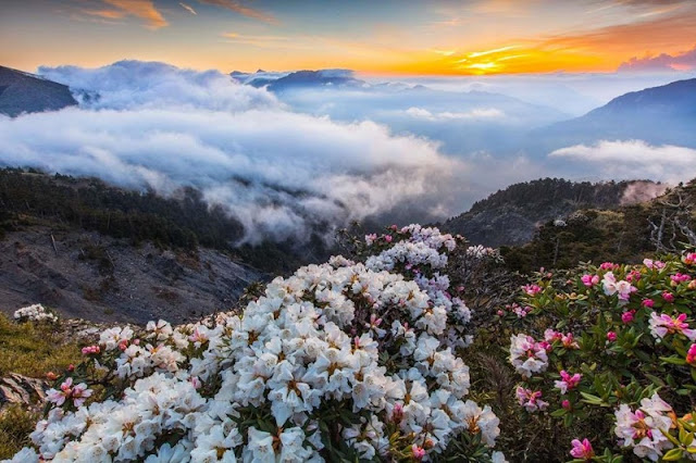 Sapa, Da Lat - Where to welcome the most beautiful spring in Asia 5