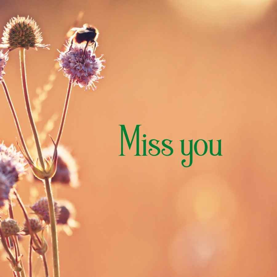 miss you my love images