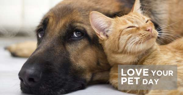 National Love Your Pet Day Wishes Awesome Picture