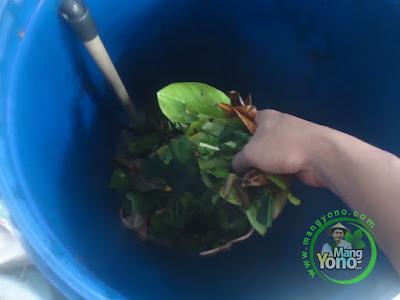 Cara Pembuatan Pupuk Organik Padat dan Pupuk Organik Cair