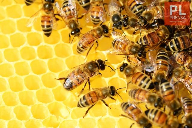 Se abre mercado de Arabia Saudita para la miel y productos apícolas chilenos