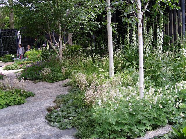 biały ogród, brzozy  w ogrodzie