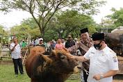 Menyambut Idul Adha 1441 H, Bupati Pijay Serahkan 183 Ekor Hewan Qurban Yang Menyebar di 8 Kecamatan