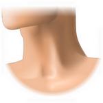 neck in spanish