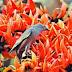 পহেলা ফাল্গুন শুভেচ্ছা এসএমএস  ফেসবুক স্ট্যাটাস | বসন্তের এসএমএস শুভেচ্ছা কবিতা