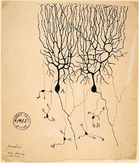 Purkinje neurons from the cerebellum, a drawing by Santiago Ramon y Cajal.