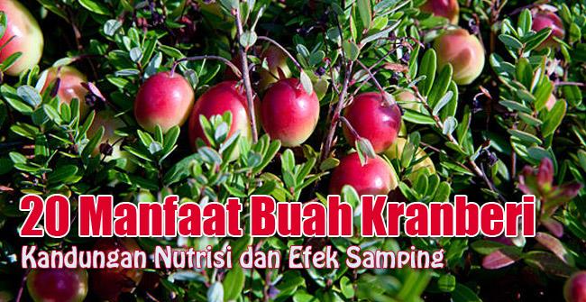 menjadi buah yang baik perawatan kulit halus dan cerah 20 Kandungan Nutrisi dan Manfaat Buah Kranberi