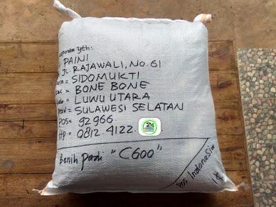 Benih Padi Pesanan  H. PAINI Luwu Utara, Sulsel  Benih Sesudah di Packing