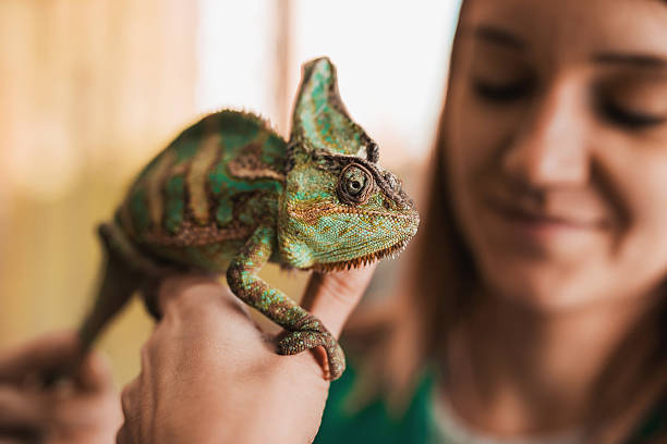 Pet Chameleon – A Fascinating Pet to Own