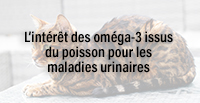 L'intérêt des oméga-3 issus du poisson pour les maladies urinaires