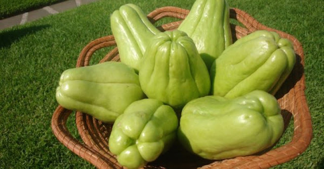 THIS GOURD PROBABLY DOESN'T LOOK IT BUT ITS HEALTH BENEFITS ARE IMMENSE