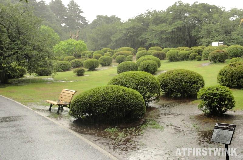 Shinjuku Gyoen 新宿御苑 shaped bushes
