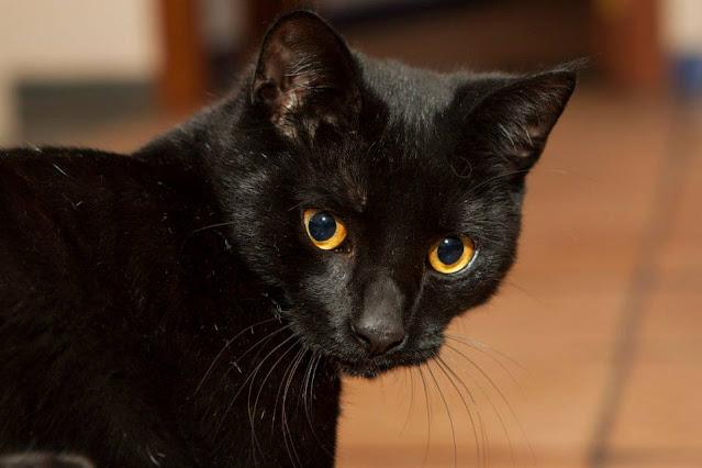 Milow il gatto nero