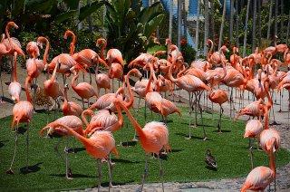 Top Best 10 Reasons to Explore San Diego, San Diego Zoo