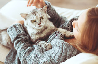 اهم 16 نصيحه عند شراء قط او قطة جديدة نصائح عند تربيه القطط
