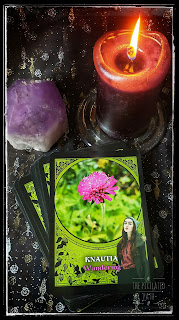 Knautia Card from Rachel Patterson's Flower Magic Oracle