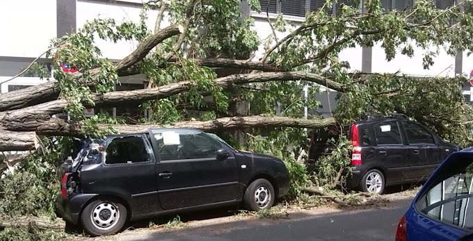 Egy család autójára dőlt egy fa a viharban: a szülők meghaltak, a két gyerek súlyos állapotban van