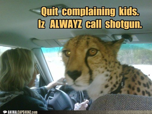 Funny Picture Clip: Cute Animal pictures Of Cool kids