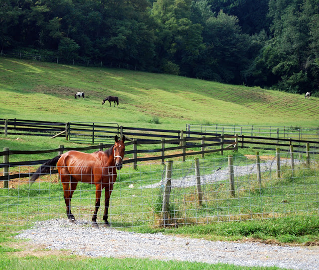 A horse in Lancaster County, PA