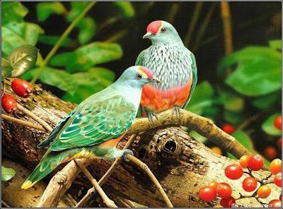 Bird Image Allfreshwallpaper