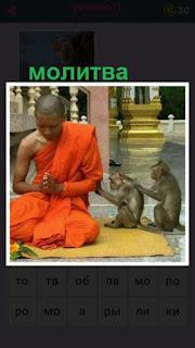 мжчина в национальной одежде молится на коленях вместе с обезьянами