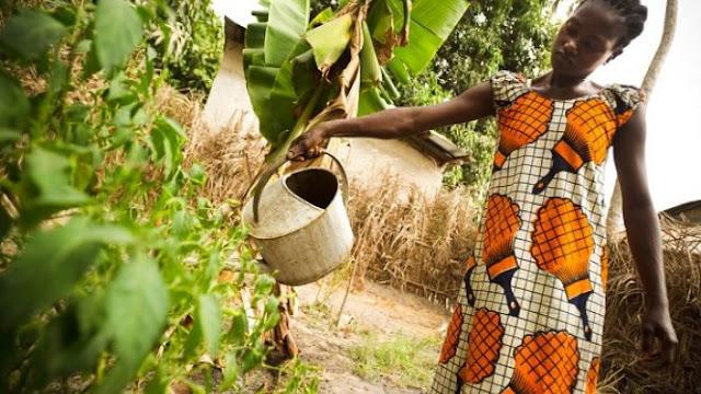Projets, plan, développement, économie, agriculture, jeune, énergie, PSE, LEUKSENEGAL, Dakar, Sénégal, Afrique