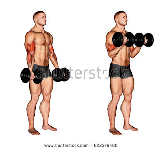 BICEP WORKOUTS: Dumbbell Biceps Curl, Alternate Dumbbell ...