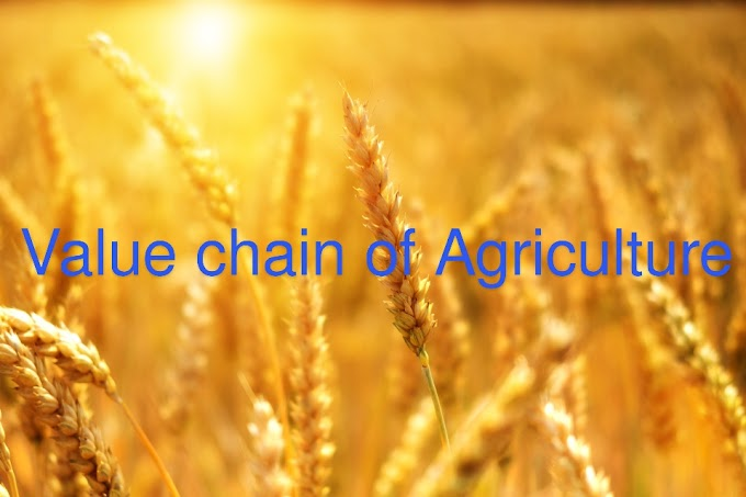 Top 4 opportunities in value chain of Agriculture