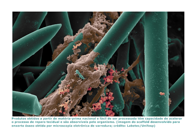 Cientistas criam membrana cutânea e estrutura para enxertos ósseos com colágeno de esponjas marinhas