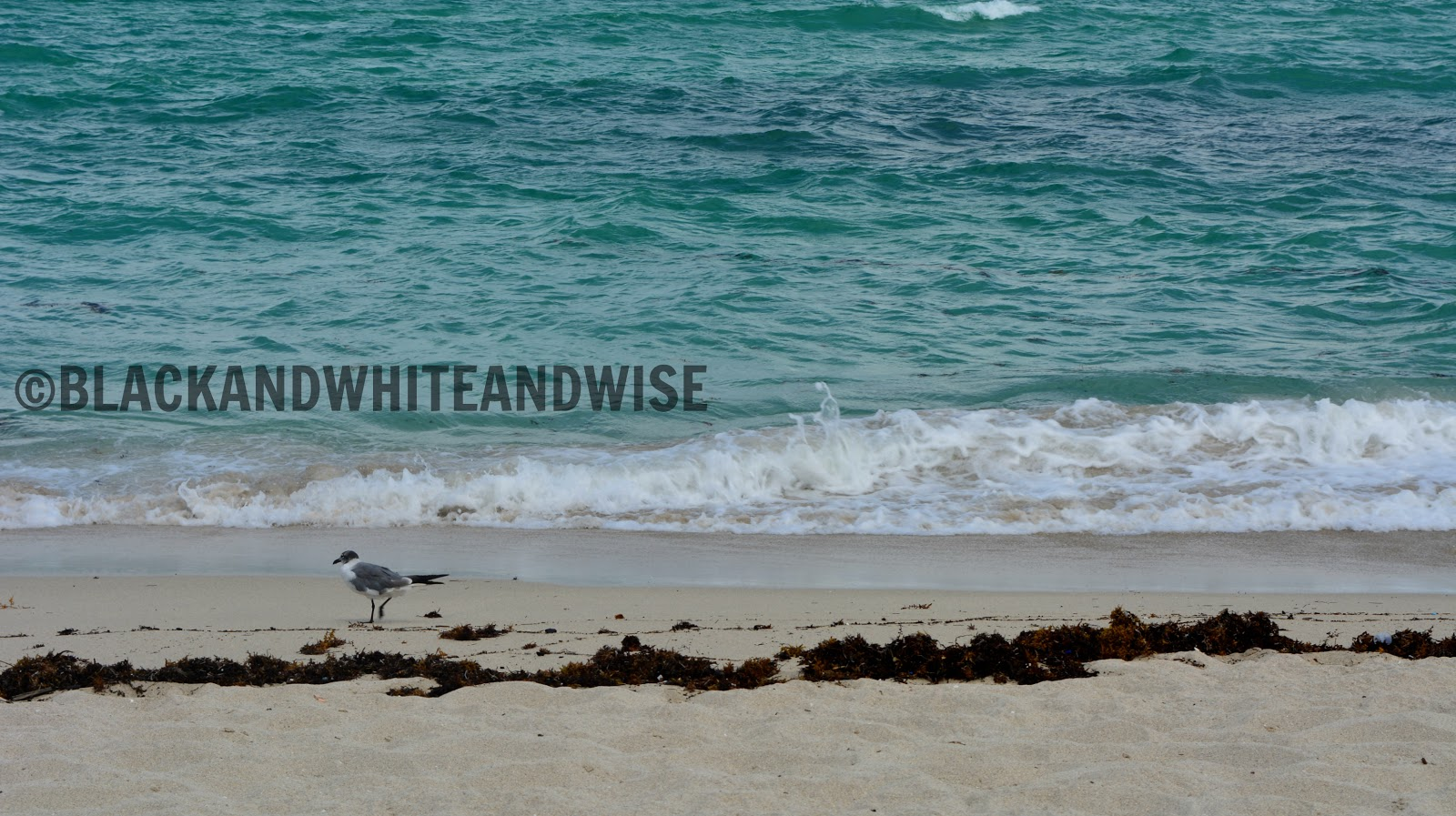 Miami Beach and seagull