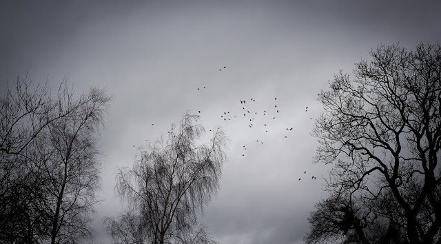 roosting birds, trees, black and white, evening, mist