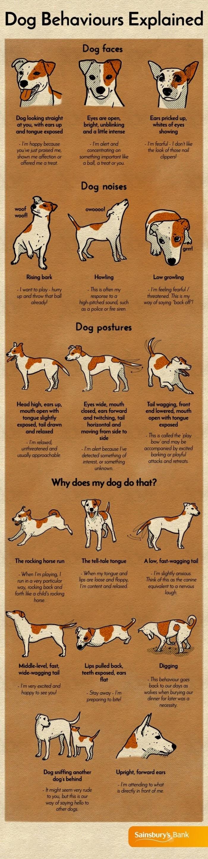 Dog behaviours explained #infographic