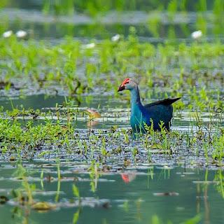 punchakkari trivandrum