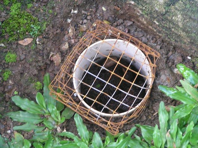 Cari Jasa Pembuatan Resapan Biopori Surabaya, Jawa Timur Profesional