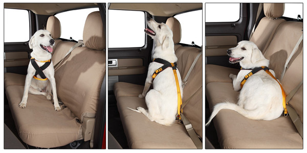 Travel Accessories For Your Dog
