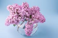 Lovely lilacs in a glass vase. Photo by Rodion Kustaev on Unsplash.